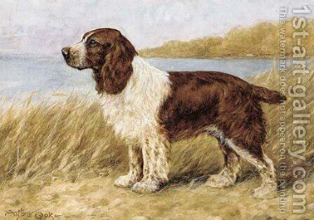 A cocker spaniel by A.C. (after) Cooke - Reproduction Oil Painting