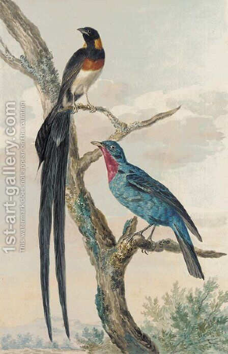A Whydah Bird and a Continga by (after) Aert Schouman - Reproduction Oil Painting