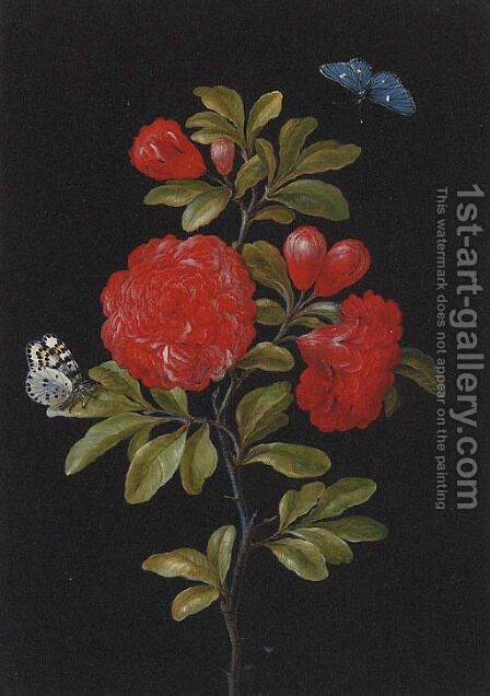 Still Life of a Rose and Butterflies by (after) Barbara Regina Dietzsch - Reproduction Oil Painting