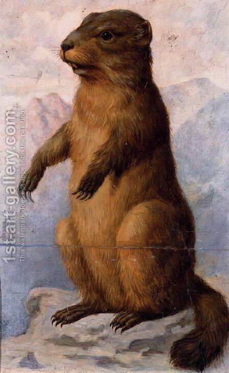 A marmot by August Von Pelzeln - Reproduction Oil Painting
