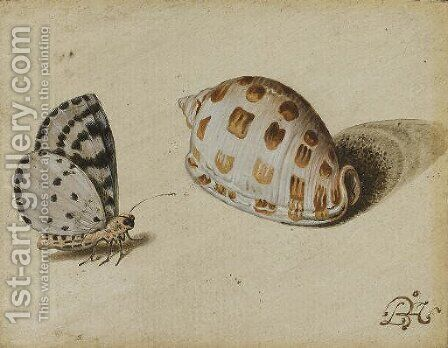 An Arrowhead Blue (Glaucopsyche piasus) butterfly and a Scotch Bonnet (Phalium granulatum) sea shell by Balthasar Van Der Ast - Reproduction Oil Painting