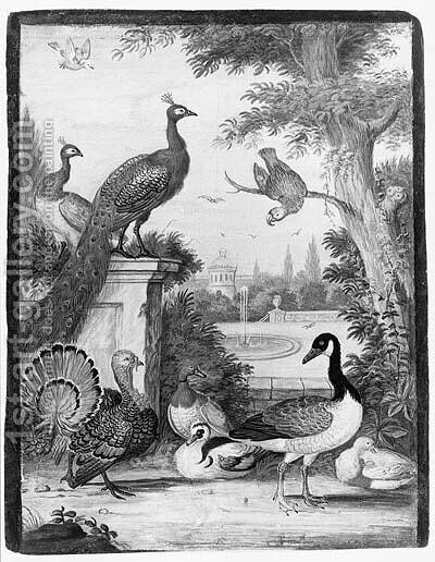 Peacocks, a Parrot, a Goose, a Turkey, Ducks and another Bird in a palatial Garden by (after) Johannes Bronkhorst - Reproduction Oil Painting