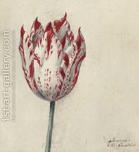 Study of a tulip by Dutch School - Reproduction Oil Painting