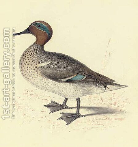 Study of a teal by Edward Lear - Reproduction Oil Painting