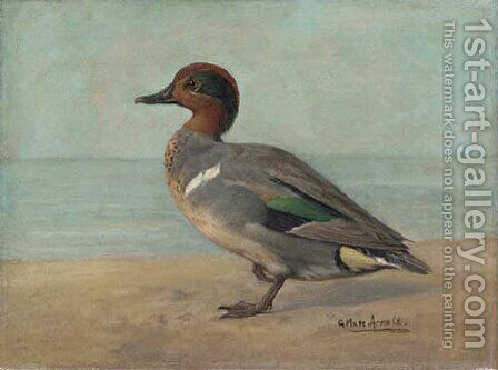 Green-winged Teal by Gustav Muss-Arnolt - Reproduction Oil Painting