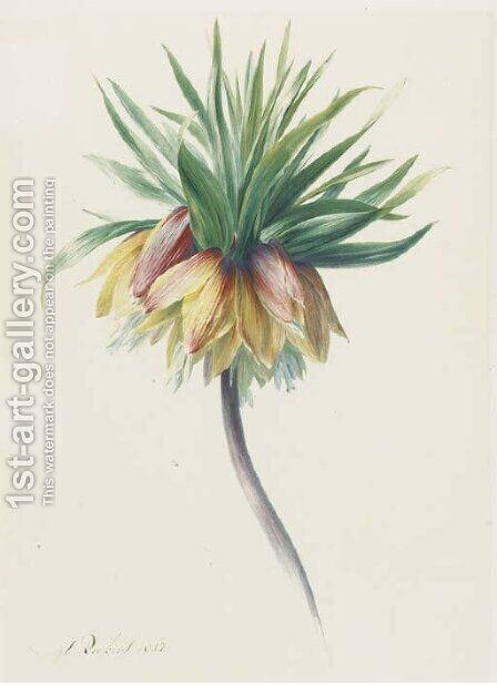 Fritillaria imperialis (Crown Imperial) by Hendrik Reekers - Reproduction Oil Painting