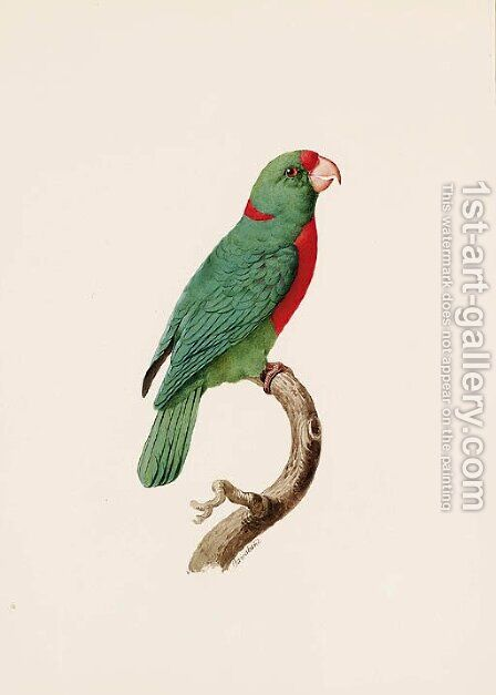 Le Perroquet Langlois (Red-fronted Parrot) by Jacques Barraband - Reproduction Oil Painting