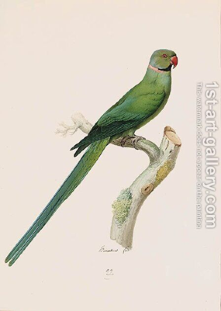 Psittacula krameri (Ring-necked Parrakeet) by Jacques Barraband - Reproduction Oil Painting