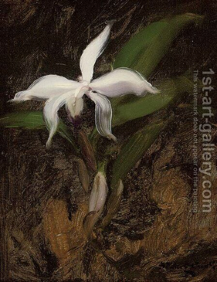 White lily by James Stuart Park - Reproduction Oil Painting