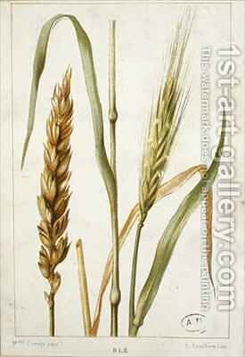 Wheat by (after) Buret, Marguerite (later Mme Cresty) - Reproduction Oil Painting