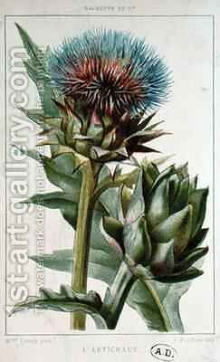 Artichoke, botanical plate by (after) Buret, Marguerite (later Mme Cresty) - Reproduction Oil Painting