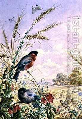 Bullfinches in a harvest field by Harry Bright - Reproduction Oil Painting