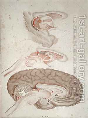 Cross-section of the Brain by Alexandre Briceau - Reproduction Oil Painting
