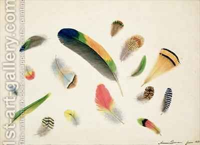Studies of Feathers by Anne Bowen - Reproduction Oil Painting