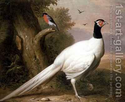 A White Pheasant in a Landscape by (after) Boggi, Giovanni - Reproduction Oil Painting