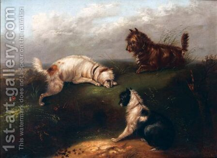 Terriers At A Rabbit Hole by (after) Edwin Armfield - Reproduction Oil Painting