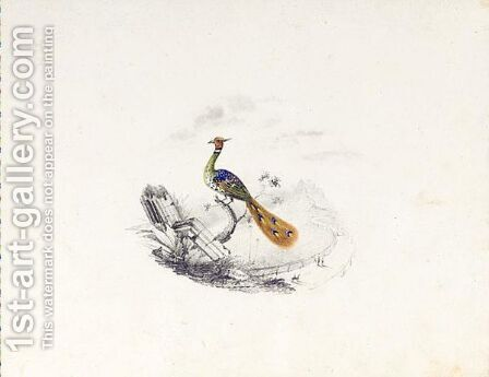 A Bird Of Paradise by Edward Lear - Reproduction Oil Painting