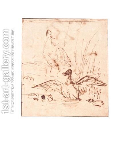 Sketches Of Ducks And Chickens by Anthonie Van Borssom - Reproduction Oil Painting