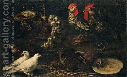 Still Life Of Cockerels, White Doves, A Jay, Grey And Red-Legged Partridge And A Cat, Together With A Wicker Basket Of Garlic by (after) Jacomo (or Victor, Jacobus) Victors - Reproduction Oil Painting