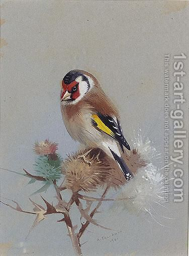 Goldfinch On Thistle by Archibald Thorburn - Reproduction Oil Painting
