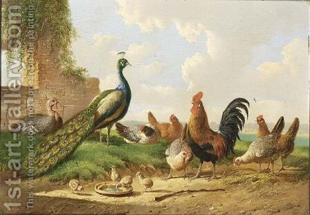 Peacocks, Cockerels And Chickens In A Landscape Near A Ruined Wall by Albertus Verhoesen - Reproduction Oil Painting