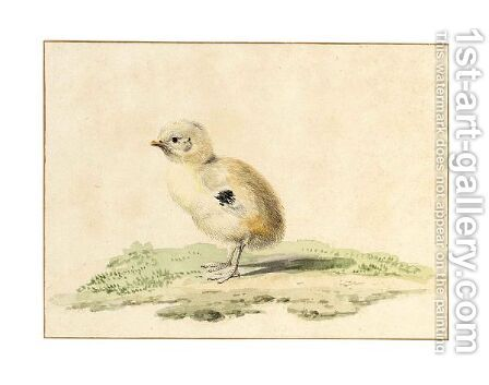A Newborn Chick by Aert Schouman - Reproduction Oil Painting