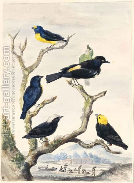 Six South-American Birds by Abraham Meertens - Reproduction Oil Painting
