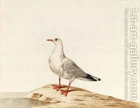A Seagull by Dutch School - Reproduction Oil Painting