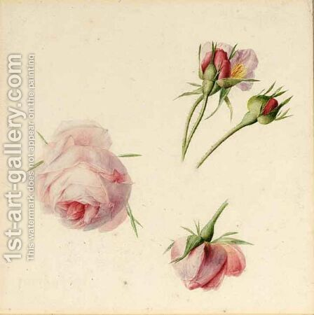 Studies Of Roses by Albertus Jonas Brandt - Reproduction Oil Painting