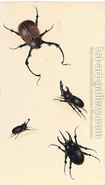 A Rhinoceros Beetle And Three Other Beetles by Dutch School - Reproduction Oil Painting