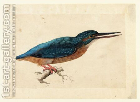 A Kingfisher On A Branch by Jacques (de Morgues) Le Moyne - Reproduction Oil Painting