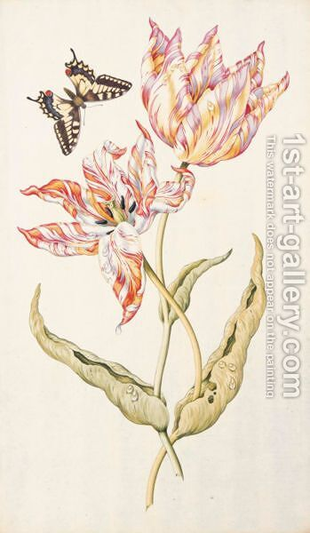 Two Tulips 'Admiral Pottebacker' And 'Isabella' With A Swallowtail Butterfly by Dutch School - Reproduction Oil Painting