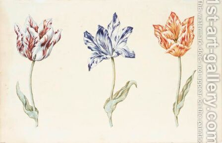 Three Tulips 'Viceroy', 'Purper En Wit Van Jeroen' And 'Isabelle' by Dutch School - Reproduction Oil Painting