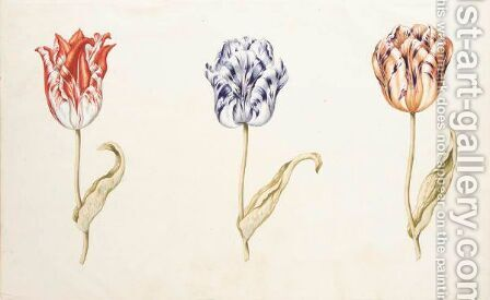 Three Tulips 'Admirael Pottenbacker', 'Anvers' And 'Generael Otto' by Dutch School - Reproduction Oil Painting