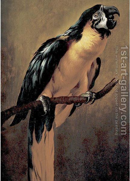A Blue And Gold Macaw by (after) Peeter Boel - Reproduction Oil Painting