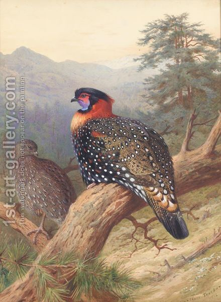 A Pair Of Western Tragopans by Archibald Thorburn - Reproduction Oil Painting