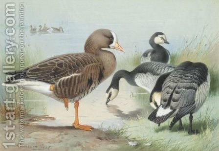 A White-Fronted Goose And Barnacle Geese by Archibald Thorburn - Reproduction Oil Painting