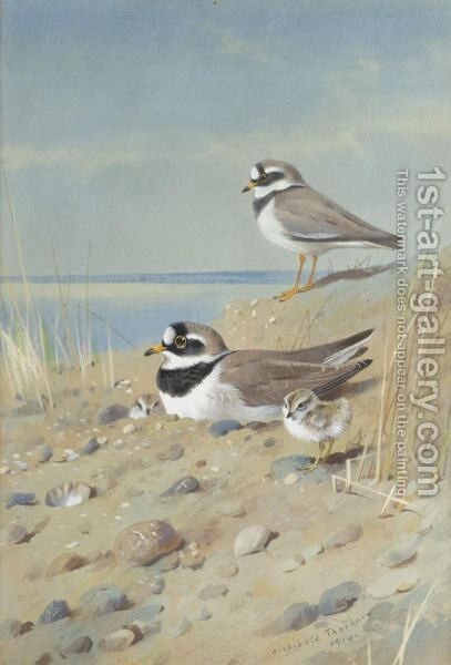 Ringed Plover And Their Young On The Shore by Archibald Thorburn - Reproduction Oil Painting