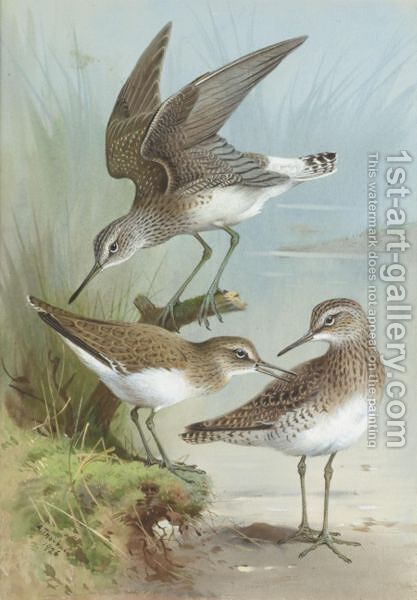 Sandpipers by Archibald Thorburn - Reproduction Oil Painting