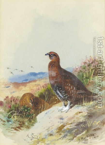 Red Grouse by Archibald Thorburn - Reproduction Oil Painting