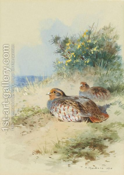 A Brace Of Grey Partridges by Archibald Thorburn - Reproduction Oil Painting