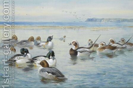 Goldeneyes And Longtails by Archibald Thorburn - Reproduction Oil Painting