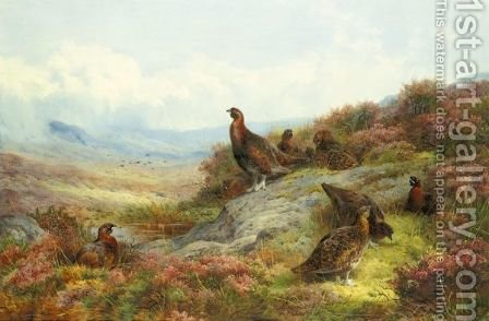 Red Grouse In A Landscape by Archibald Thorburn - Reproduction Oil Painting