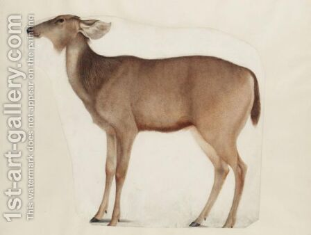 A Study Of An Antelope by (after) Franz Anton Von Scheidel - Reproduction Oil Painting