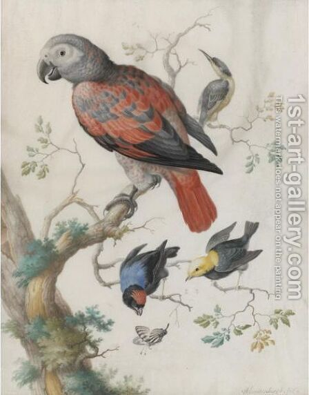 A Red And Gray Parrot, And Other Exotic Birds by Anton Henstenburgh - Reproduction Oil Painting