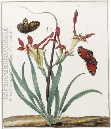 A South African Gladiolus, With Two European Butterflies by Dutch School - Reproduction Oil Painting
