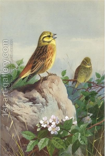 A Pair Of Yellowhammers by Archibald Thorburn - Reproduction Oil Painting