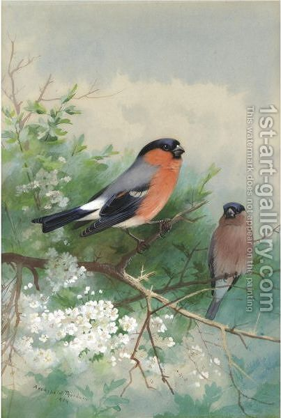 A Pair Of Bullfinches by Archibald Thorburn - Reproduction Oil Painting