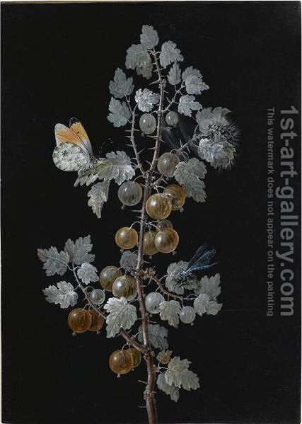 A Gooseberry Branch, With A Dragonfly, Butterfly And Caterpillar by Barbara Regina Dietzsch - Reproduction Oil Painting