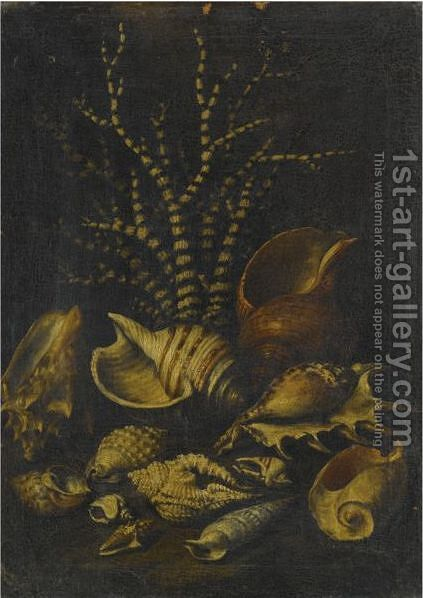 A Still Life With A Lambis Lambis, A Cypraea, A Cymatiide, A Cenithium, A Galaodea And Other Shells by (after) Bartolommeo Bimbi - Reproduction Oil Painting